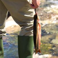 fiske-1